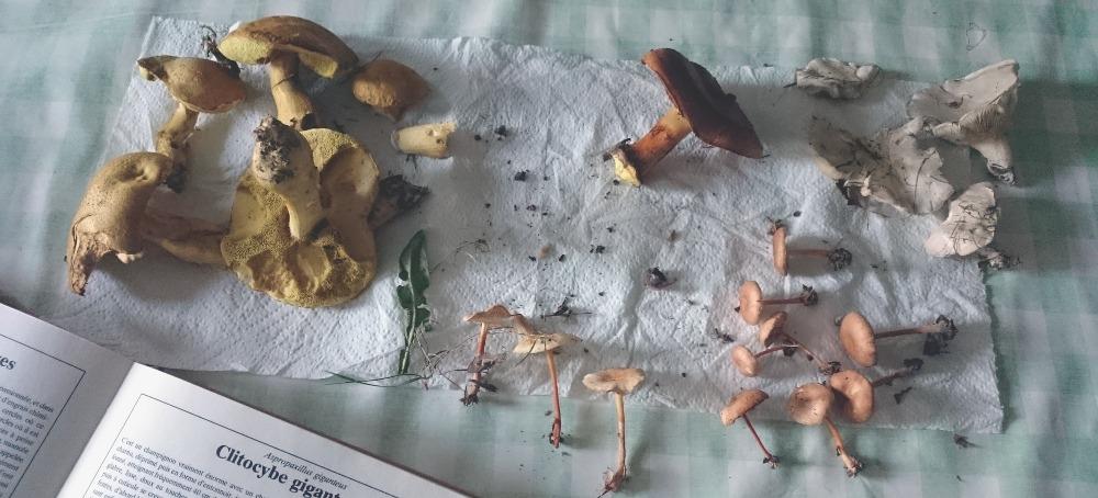 champignions (mushrooms)