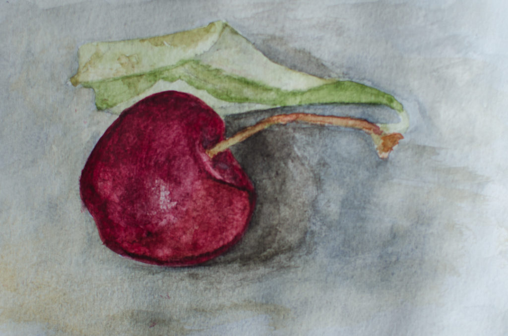 A Spanish cherry, in watercolour, May 2019.