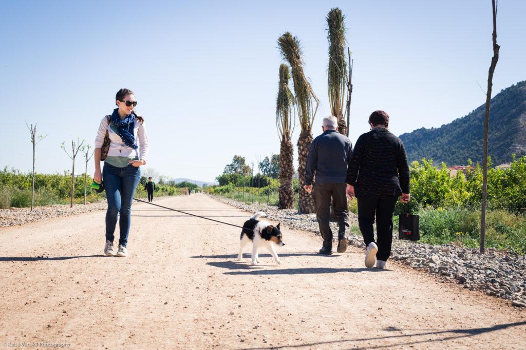 Dog walking testimonial